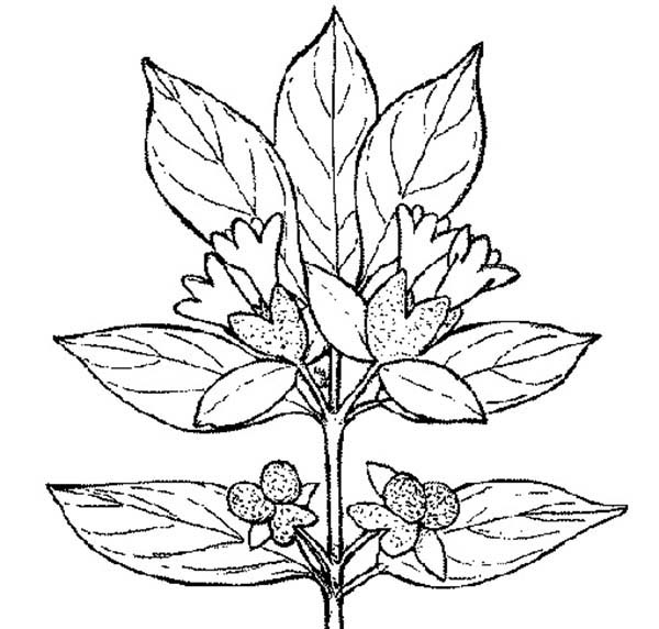 Plants, : Plants Coloring Page for Kids
