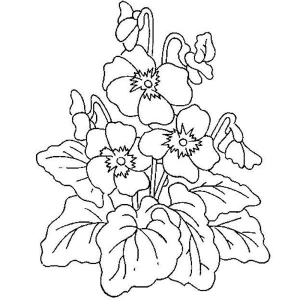 Plants, : Plants Lovely Flower Coloring Page