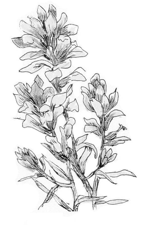 Plants, : Plants a Flower Coloring Page