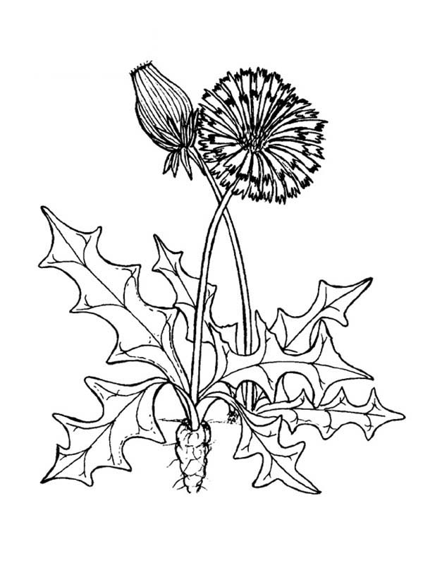 Plants, : Plants in Flowerpot Coloring Page