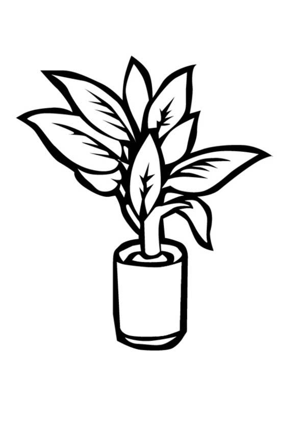 Plants, : Plants in Little Vase Coloring Page