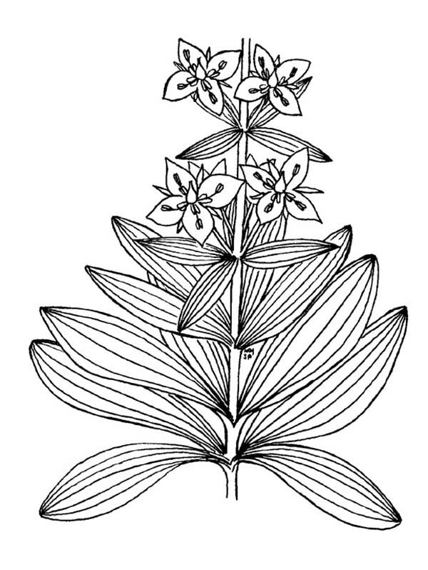 Plants, : Plants in the Garden Coloring Page