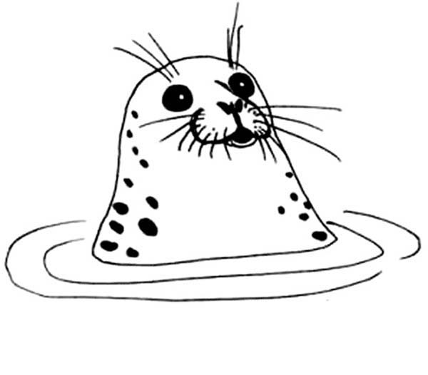 Seal, : Ringed Seal Under Water Coloring Page