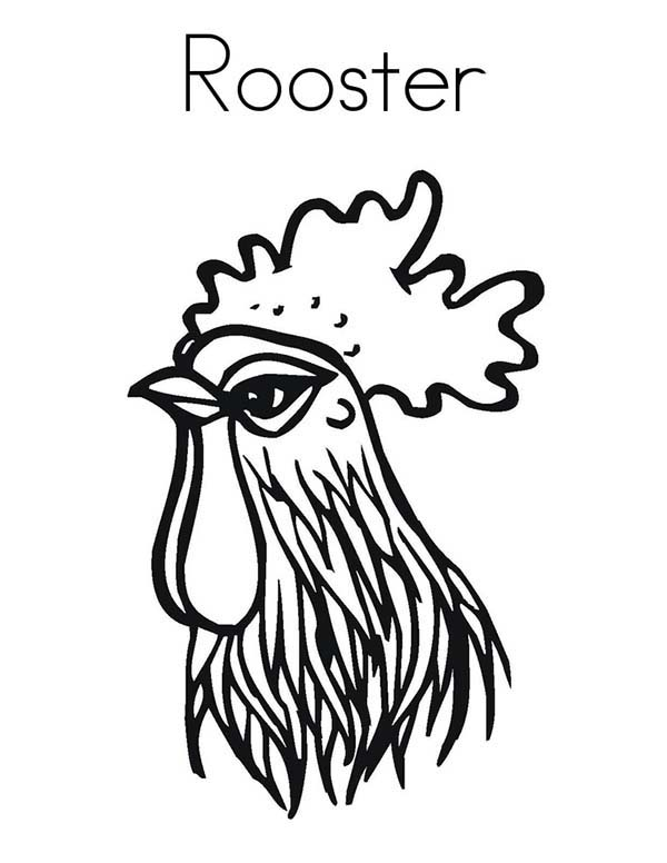 Rooster Head Coloring Page : Coloring Sky