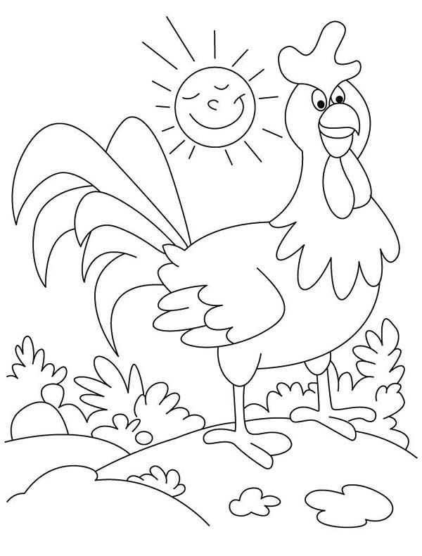 Rooster, : Rooster Wander Around on Sunny Day Coloring Page