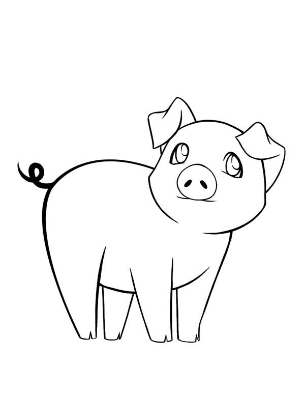 Pig, : Sad Pig Coloring Page