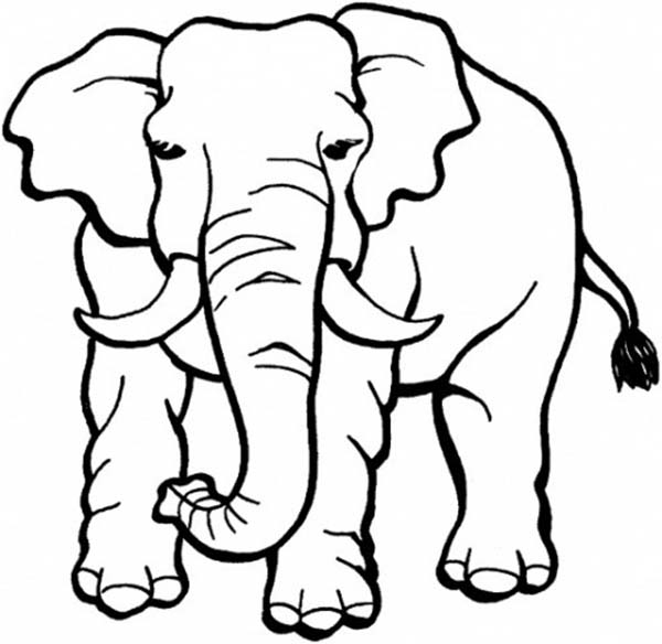 Safari, : Safari Animals Elephant Coloring Page
