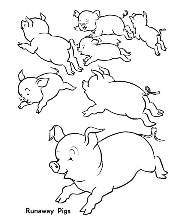 Pig, : School of Pig Coloring Page