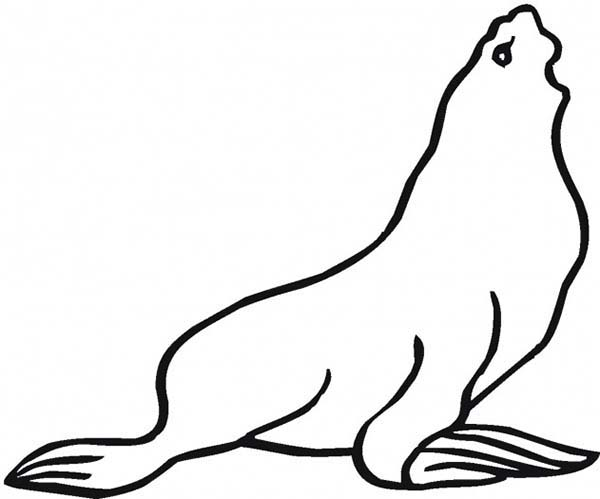Seal, : Seal Want to Eat Coloring Page