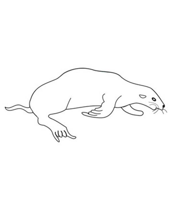 Seal, : Seal is Sleeping Coloring Page