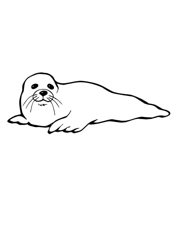 Seal, : Seal is Tired and Want to Rest Coloring Page