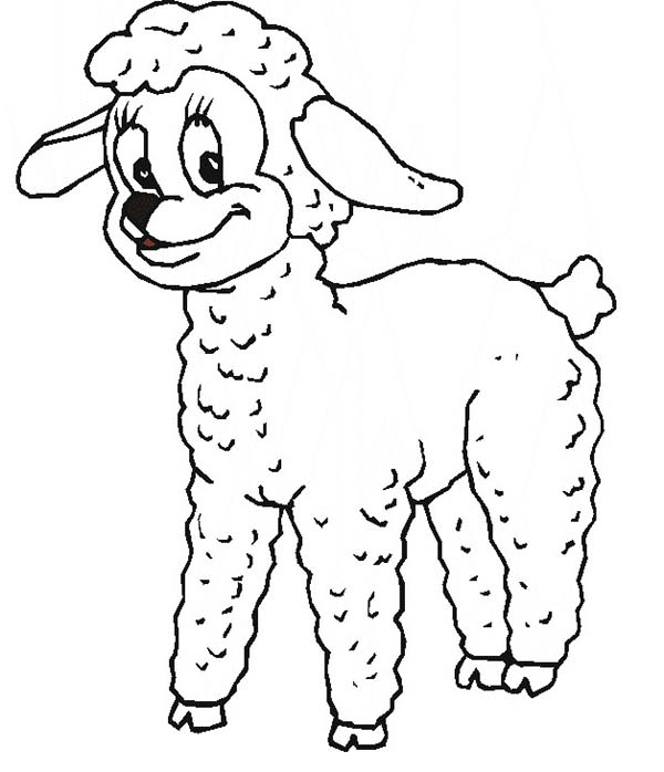 Sheep, : Sheep Beautiful Eyes Coloring Page