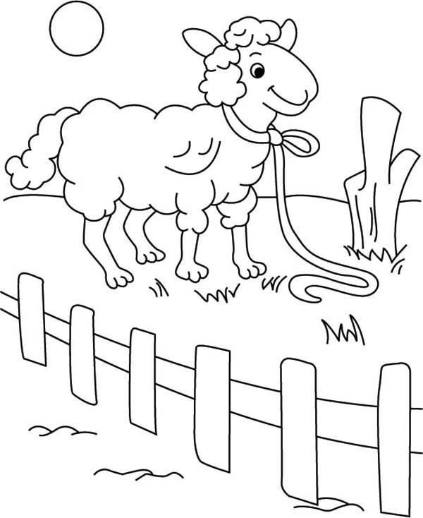 Sheep, : Sheep Behind Fence Coloring Page