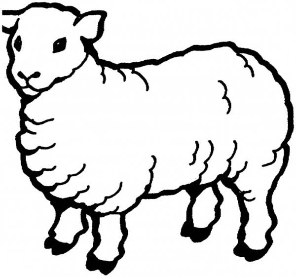 Sheep, : Sheep Coloring Page for Kids