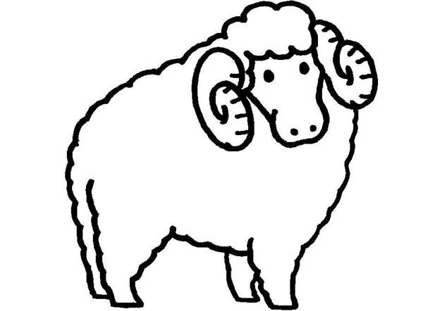 Sheep, : Sheep Curly Horn Coloring Page