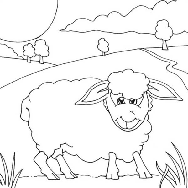 Sheep, : Sheep Eating Grass Coloring Page