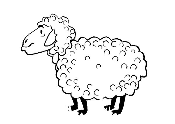 Sheep, : Sheep Full of Fur Coloring Page