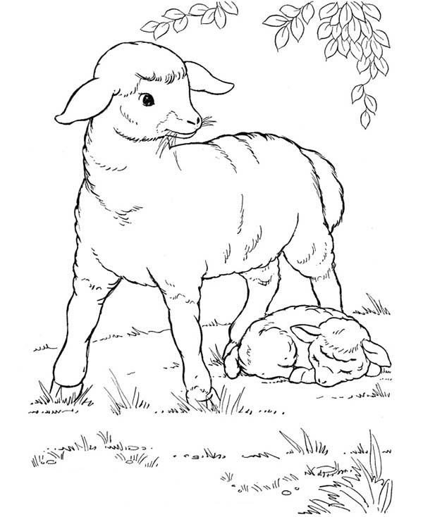 Sheep, : Sheep Mother Keeping Her Baby from Danger Coloring Page