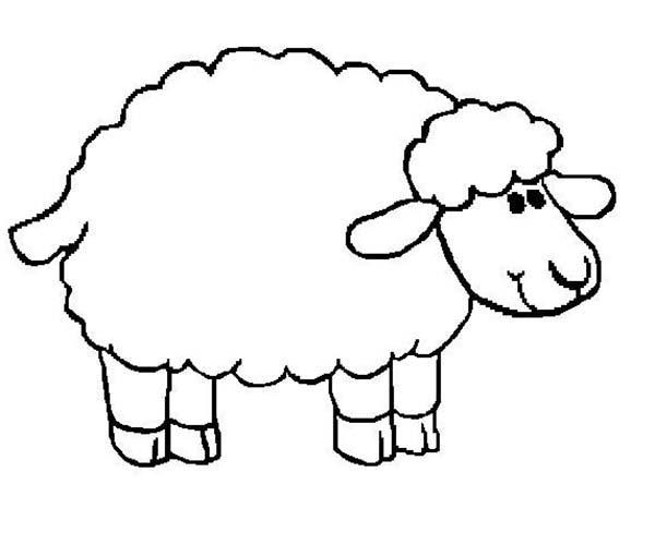 Sheep, : Sheep Soft Fur Coloring Page