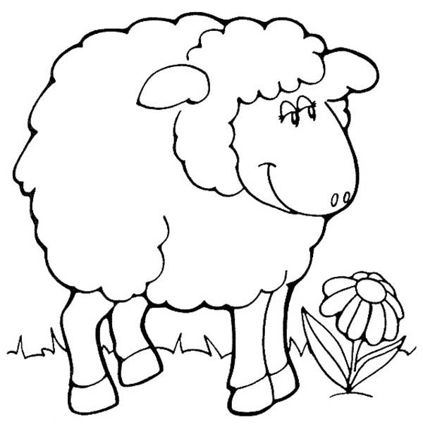 Sheep, : Sheep and a Beautiful Flower Coloring Page