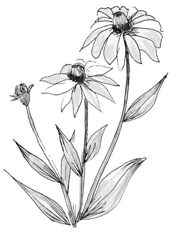 Plants, : Sketch of Flower Plants Coloring Page