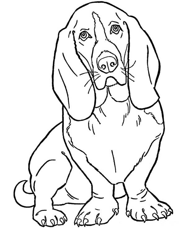 Pet, : Slinky Dog Cute Animal for Pet Coloring Page