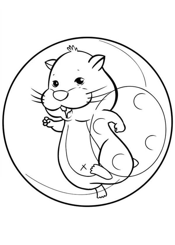 Smiling Hamster Pet Coloring Page