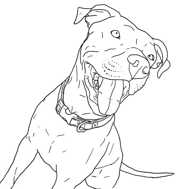Taking Pitbull Out For Walk Coloring Page Coloring Sky