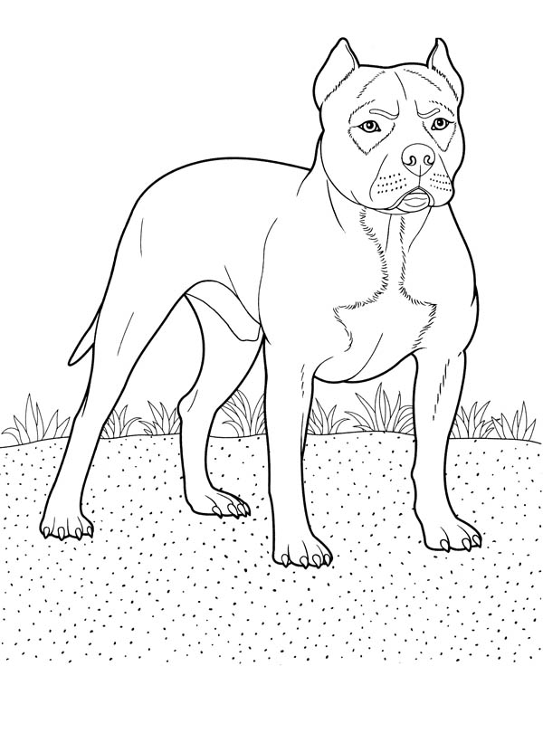 Pitbull, : Trained Police Pitbull Coloring Page