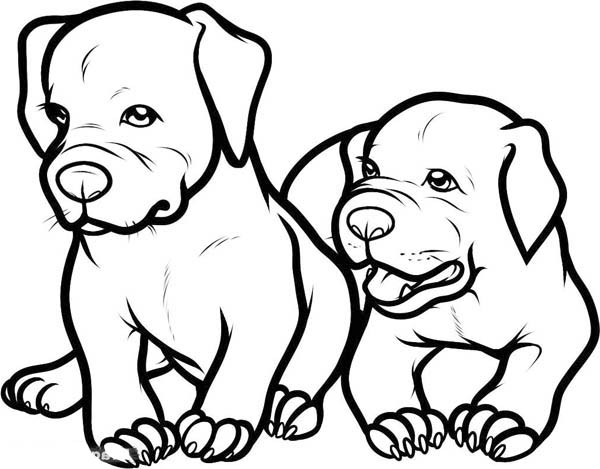 Two Adorable Baby Pitbull Dog Coloring Page | Coloring Sky