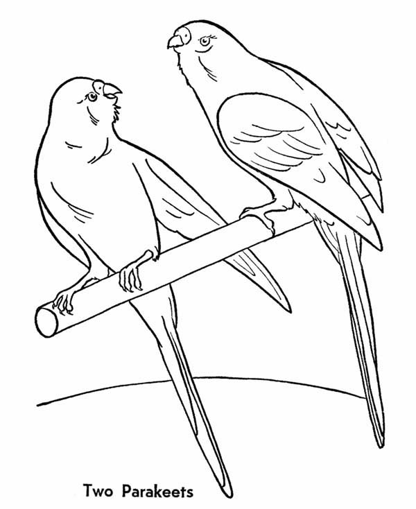 Pet, : Two Parakeets for Pet Coloring Page