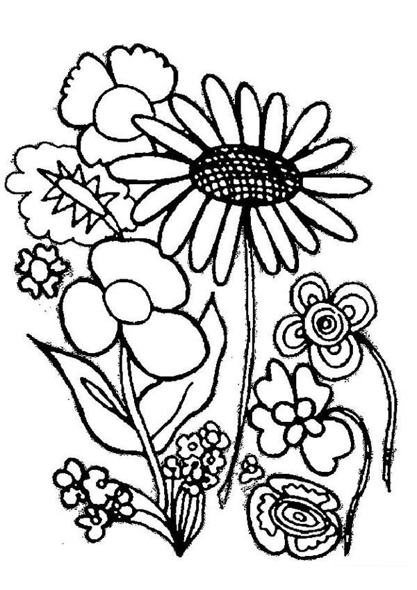 Plants, : Various Type of Flower Plants Coloring Page