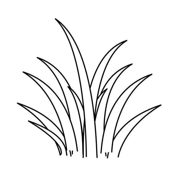 Wild Plants Coloring Page | Coloring Sky
