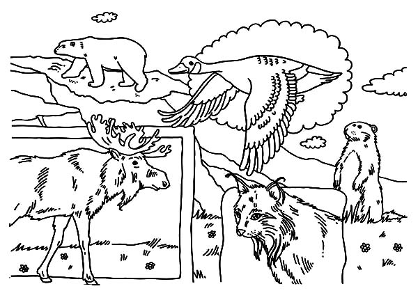 Canada Day Event, : Bunch of Indigenous Animals on Canada Day Event Coloring Pages