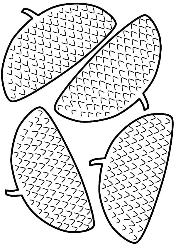 Acorn, : Acorn Head Coloring Pages