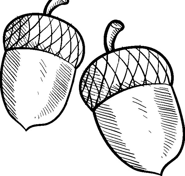 Acorn Or Buckeye Coloring Pages Coloring Sky