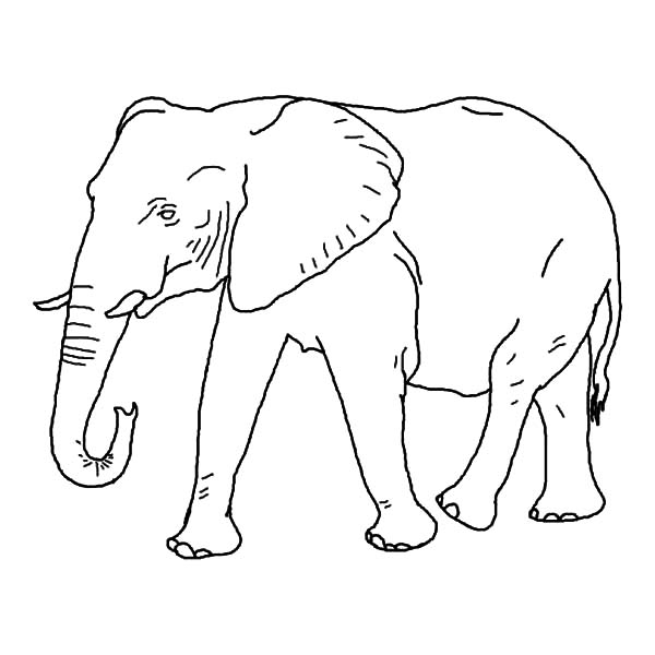 African Elephant Looking For Food Coloring Pages Coloring Sky