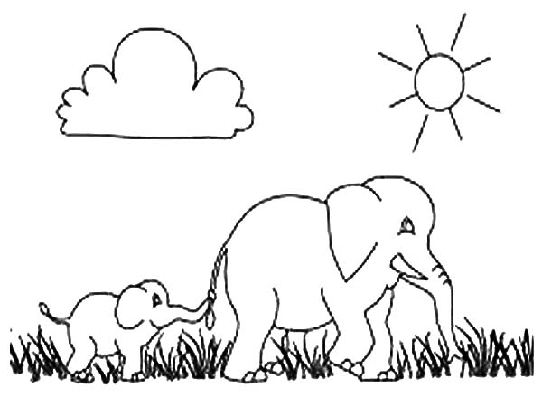 African Elephant Walking March With Her Son Coloring Pages ...