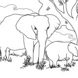Sketch Of African Elephant Coloring Pages Coloring Sky