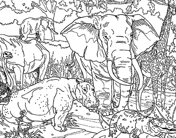 African Elephant And Other Protected Animals Coloring Pages ...