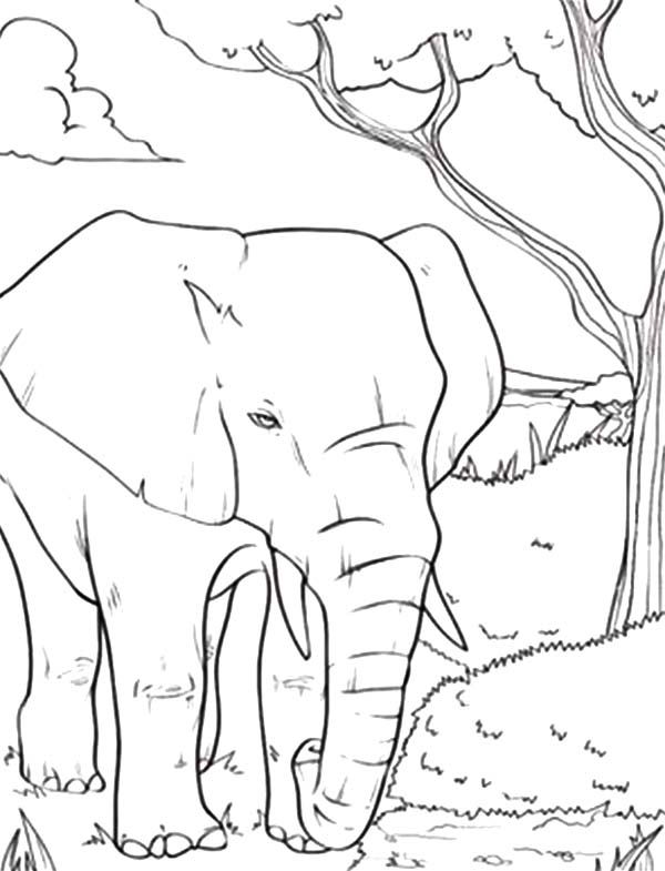 Coloring Pages Of African Elephant