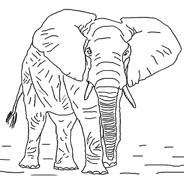 An Old African Elephant Coloring Pages | Coloring Sky