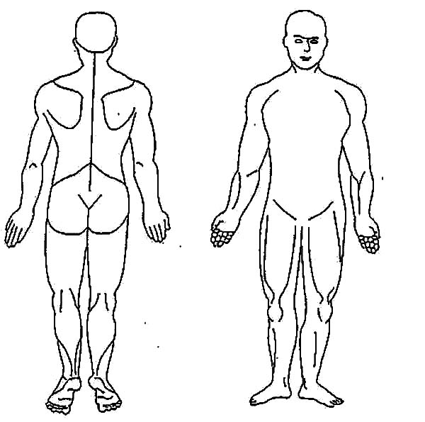 Human Body, : Anterior and Posterior Human Body Coloring Pages