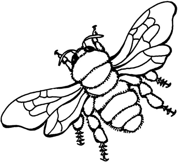 Honey Bee, : Flying Honey Bee Coloring Pages
