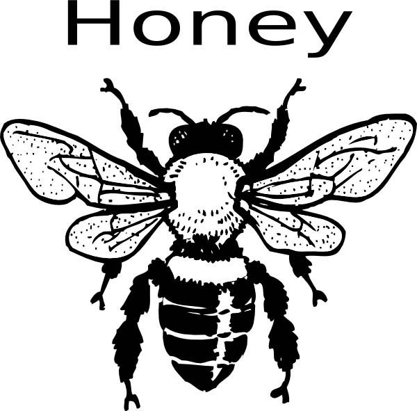 Honey Bee, : H is for Honey Bee Coloring Pages