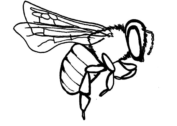 Honey Bee, : Honey Bee Collecting Pollen Coloring Pages