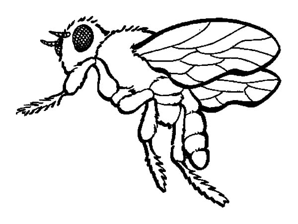 Honey Bee, : Honey Bee Coloring Pages for Kids