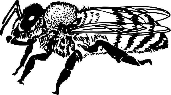 Honey Bee, : Honey Bee Coloring Pages