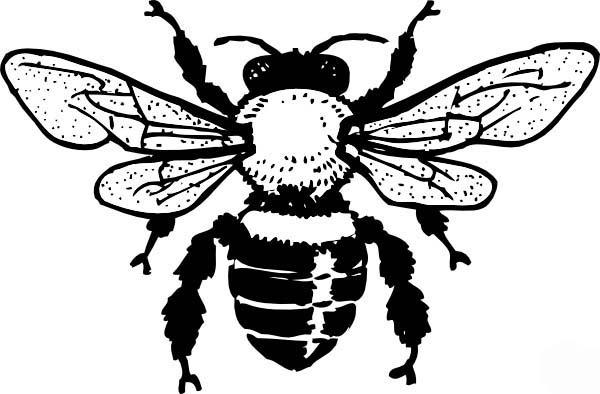 Honey Bee, : Honey Bee Queen Coloring Pages