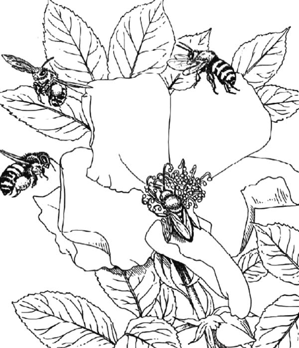 Honey Bee, : Honey Bee Working Together Coloring Pages